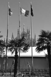 Piazza Duomo Palme 1