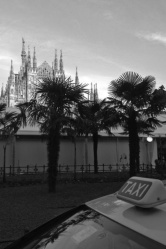 Piazza Duomo Palme 2