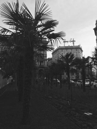 Piazza Duomo Palme 8