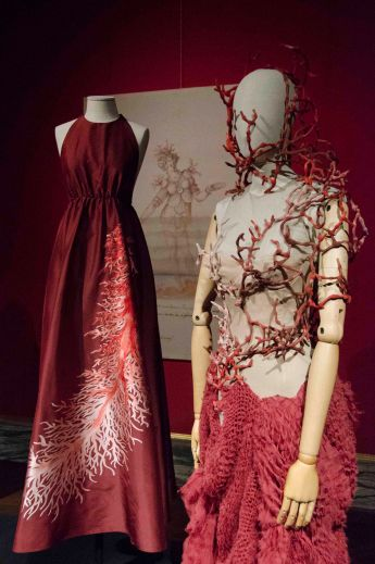 animalia fashion 10