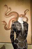 animalia fashion 14